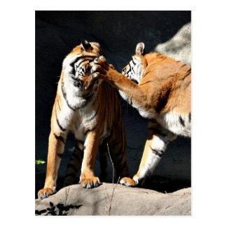 Tiger-heftiger Schlag Postkarte