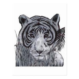 Tiger im Gras Postkarte