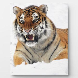 Tiger im Schnee Fotoplatte