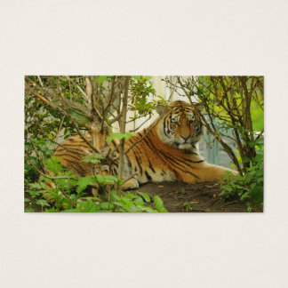 Tiger im Wald Visitenkarte