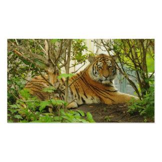 Tiger im Wald Visitenkarten Vorlage