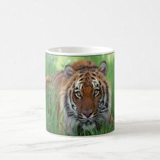 Tiger Kaffeetasse