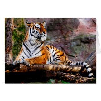 Tiger Karte