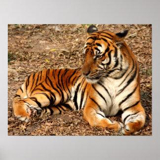 Tiger-Katzen-Druck-Gewohnheit personifizieren Poster