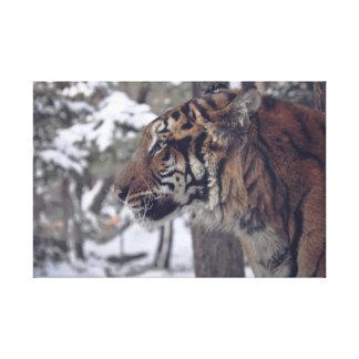 Tiger-Leinwand-Wand-Druck Leinwanddruck