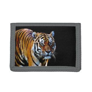 Tiger mit schwarzem Hintergrund