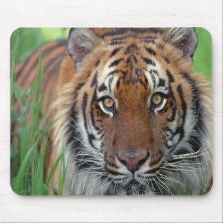 Tiger Mousepad