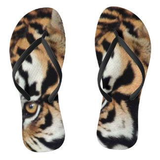 Tiger mustert Tier-Foto der Gesichts-Nahaufnahme-  Flip Flops