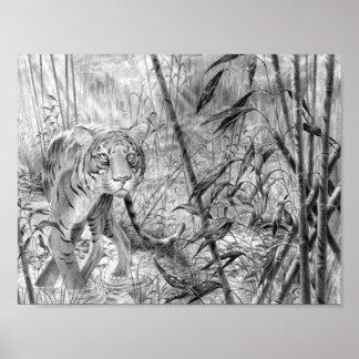 Tiger nach dem Regen Poster