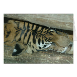 Tiger-Nickerchen Karte