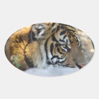 Tiger Ovaler Aufkleber