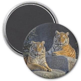 Tiger-Schwestern Runder Magnet 7,6 Cm