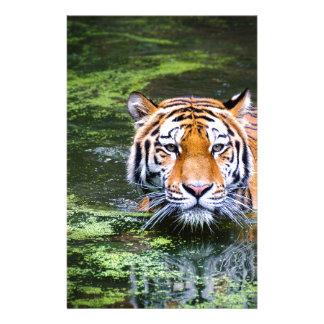 Tiger-Schwimmen Briefpapier