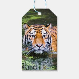 Tiger-Schwimmen Geschenkanhänger