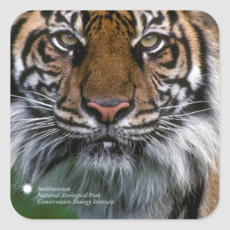 Tiger Soyono Smithsonian   Sumatran Quadratischer Aufkleber