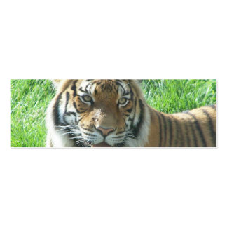 Tiger und Gorilla Mini-Visitenkarten