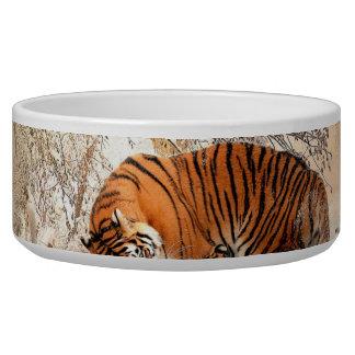 Tiger und Junges - Tiger Napf