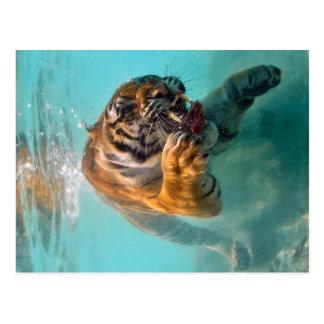 Tiger Unterwasser Postkarte