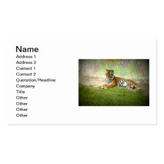 Tiger Visitenkarten Vorlagen