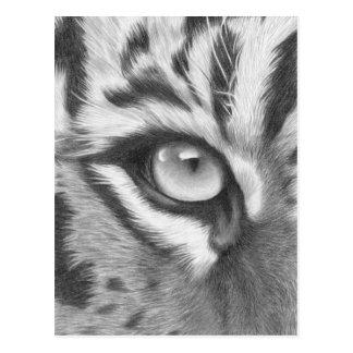 Tigerauge - Bleistiftzeichnung Postkarte