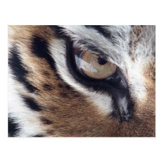 Tigerauge Postkarte