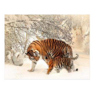 Tigerfamilien-Mammasohn Postkarten