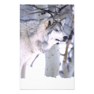 Timberwolf, Canis Lupus, Film Tierutah) Fotografie
