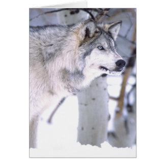 Timberwolf, Canis Lupus, Film Tierutah) Karte