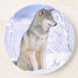 Timberwolf, der im Schnee sitzt, Canis Lupus, Untersetzer