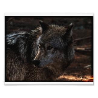 Timberwolf Fotodruck