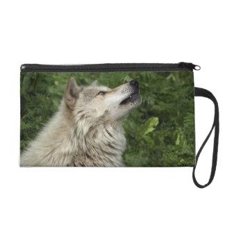 Timberwolf-grauer Wolf-wildes Wristlet