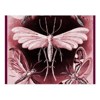 Tineida - Mothes Postkarte