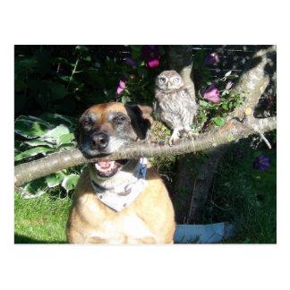 Tiny owl and big dog postkarte