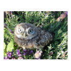 Tiny Owl Postkarte