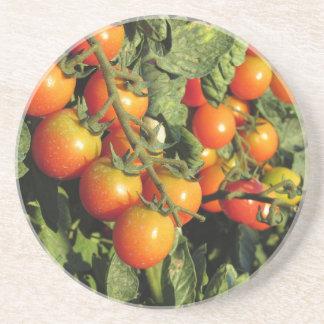 Tomate-Pflanzen, die im Garten wachsen Getränkeuntersetzer