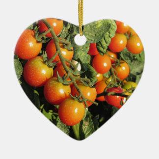Tomate-Pflanzen, die im Garten wachsen Keramik Ornament