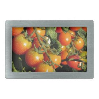 Tomate-Pflanzen, die im Garten wachsen Rechteckige Gürtelschnalle