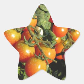 Tomate-Pflanzen, die im Garten wachsen Stern-Aufkleber