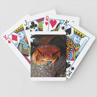 Tomatefrosch Bicycle Spielkarten