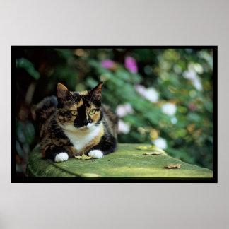 Tortie Katze auf Garten-Bank Poster