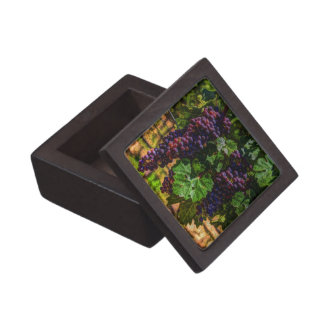 Toskana-Weinbergtrauben des Schachtel