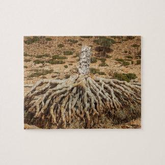 Toter Drachenblut-Baum, Socotra, der Jemen Puzzle