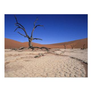 Totes Vlei, Sossusvlei, Namib-Naukluft Postkarte