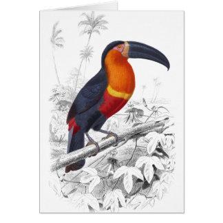Toucan Notecard Karte