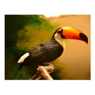 Toucan Postkarte