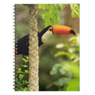 Toucan Vogel Spiral Notizblock
