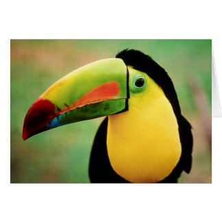 Toucan Vogel-wilde Natur-bunte Fotografie Karte