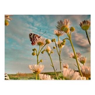 Touch des magischen Staubes von Unze Postkarte