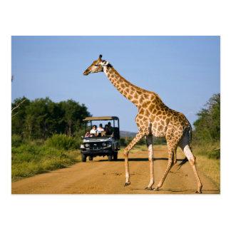 Touristen, die Giraffe aufpassen Postkarte