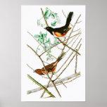 Towhe, das John James Audubon-Vögel von Amerika Poster